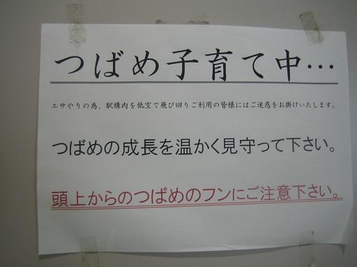 IMG_6072 - コピー
