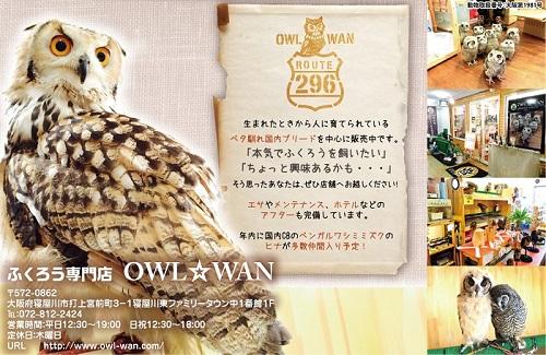 owlwan1129-001.jpg