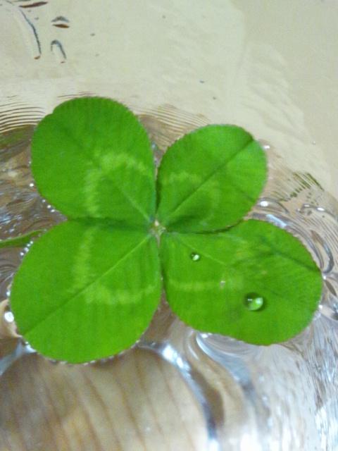 clover 2