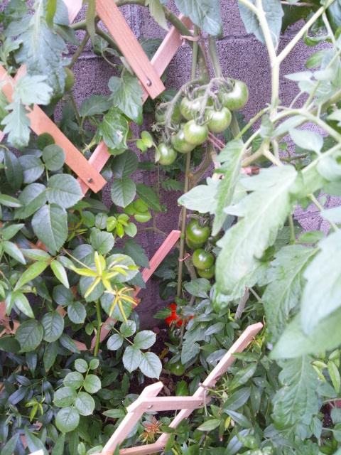 garden 2012 7 11 1