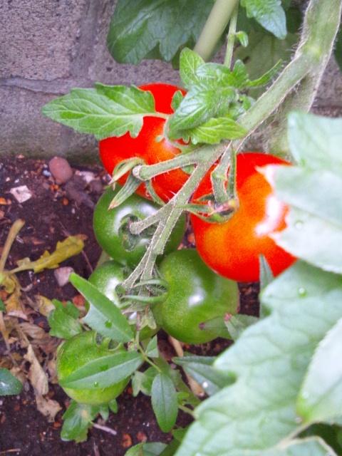 garden 2012 7 11 2