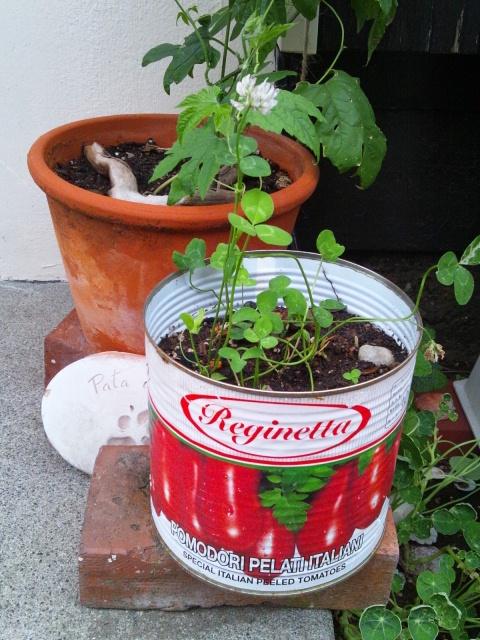 garden 2012 7 11 3