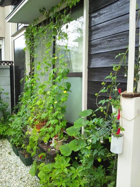 garden 2012 7 11 4