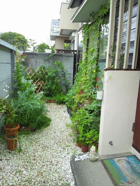 garden 2012 7 11 5