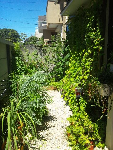 2012 8 23 garden