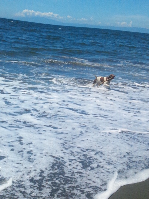 2012 8 23 beach dog 1