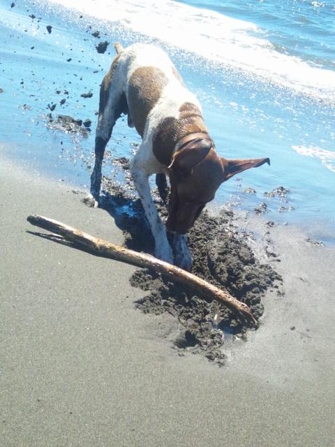 2012 8 23 beach dog 3