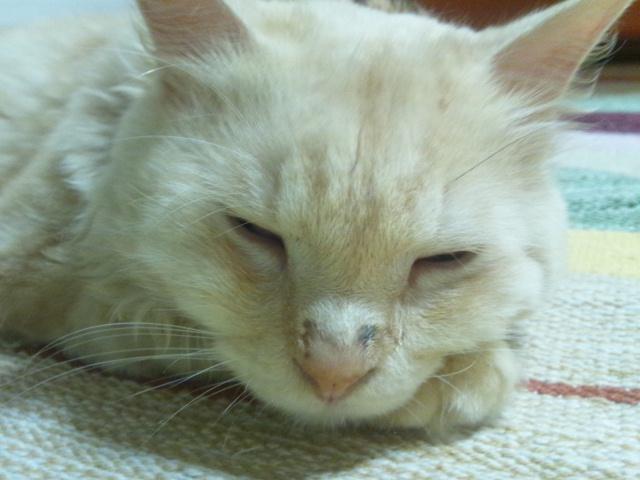 2012 8 27 ren 1