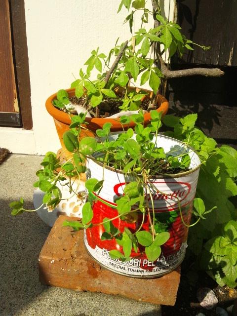 2012 9 1 garden 5