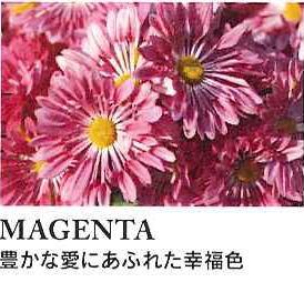 MAGENTA (3)