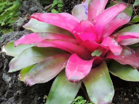 N0075熱帯植物