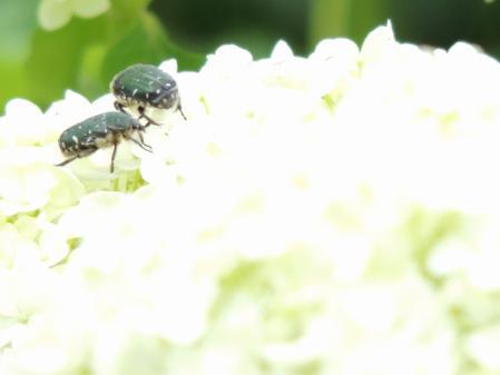 N0289虫たち