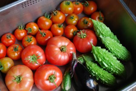 7169野菜たち