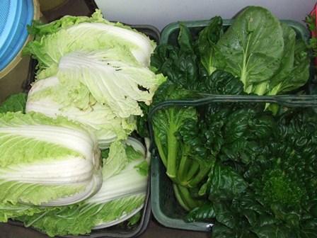 白菜たー菜