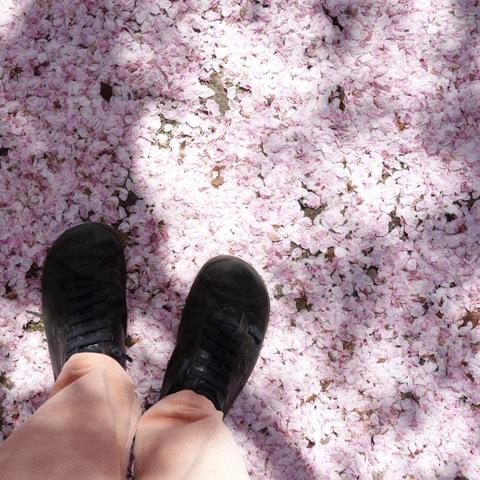 2013桜12
