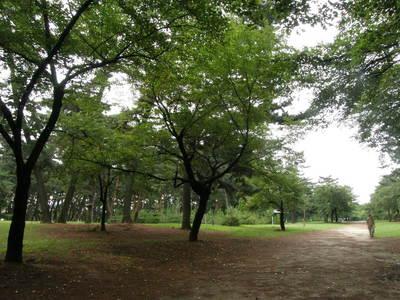 敷島公園内