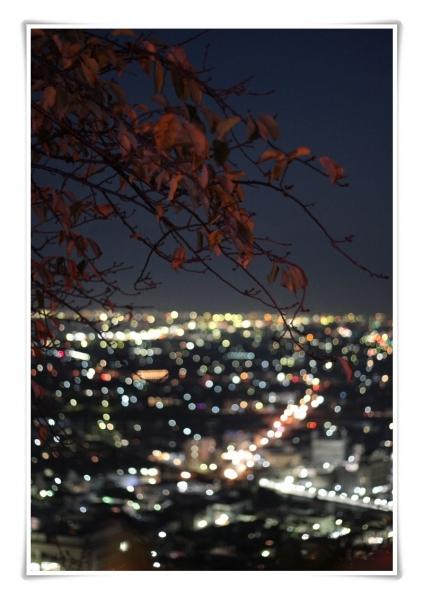 きらきらフェスタ(松田山ハーブガーデン)
