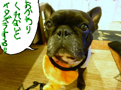 snap_myfrenchbulldog_2012103195050.jpg