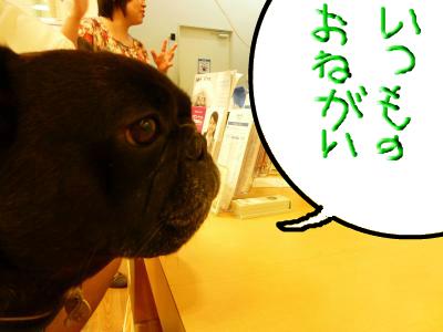 snap_myfrenchbulldog_201210583717.jpg