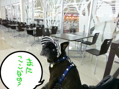 snap_myfrenchbulldog_2012106195751.jpg
