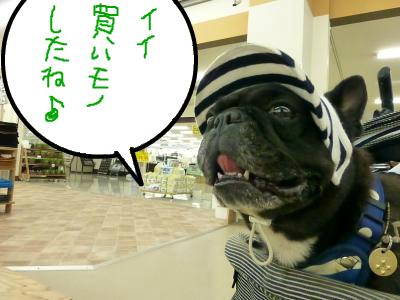 snap_myfrenchbulldog_201210620628.jpg