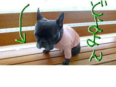 snap_myfrenchbulldog_201211072934.jpg