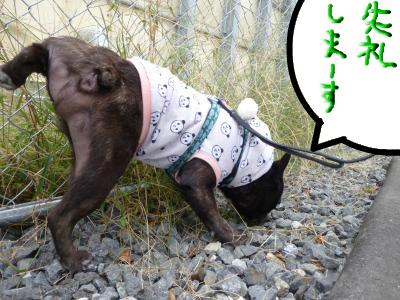 snap_myfrenchbulldog_201211118370.jpg