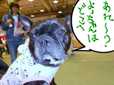 snap_myfrenchbulldog_201211118409.jpg