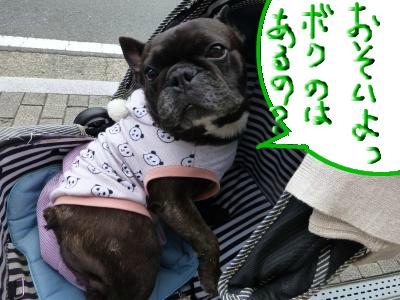 snap_myfrenchbulldog_2012112204126.jpg