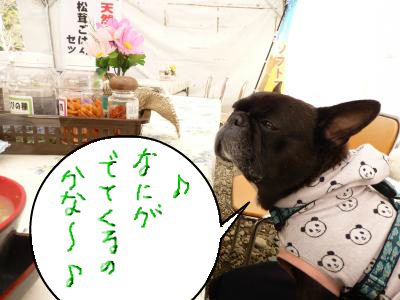 snap_myfrenchbulldog_2012113202636.jpg