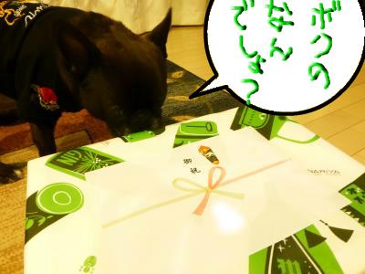 snap_myfrenchbulldog_2012114204115.jpg
