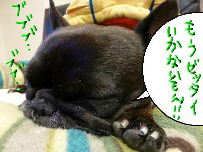 snap_myfrenchbulldog_2012115202927.jpg