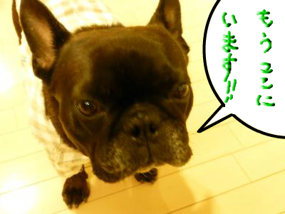 snap_myfrenchbulldog_201211620110.jpg