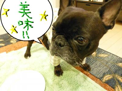 snap_myfrenchbulldog_2012116203046.jpg