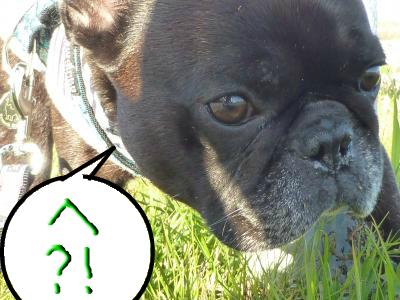 snap_myfrenchbulldog_2012122113251.jpg