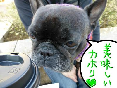 snap_myfrenchbulldog_201212212344.jpg