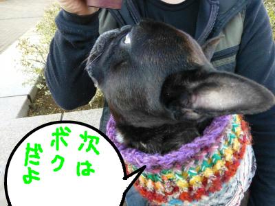 snap_myfrenchbulldog_2012122123628.jpg