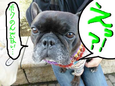 snap_myfrenchbulldog_2012122124052.jpg
