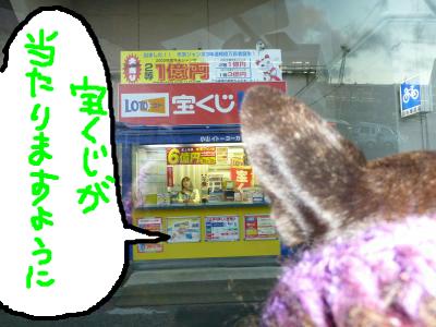 snap_myfrenchbulldog_201212221155.jpg