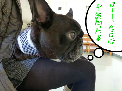 snap_myfrenchbulldog_201212318274.jpg