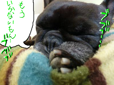 snap_myfrenchbulldog_2012123183053.jpg