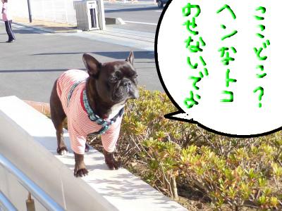 snap_myfrenchbulldog_201212414234.jpg