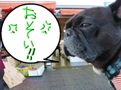 snap_myfrenchbulldog_201212415436.jpg