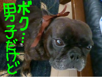 snap_myfrenchbulldog_20127021358.jpg