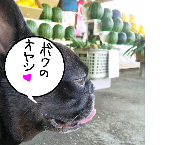 snap_myfrenchbulldog_201273145124.jpg