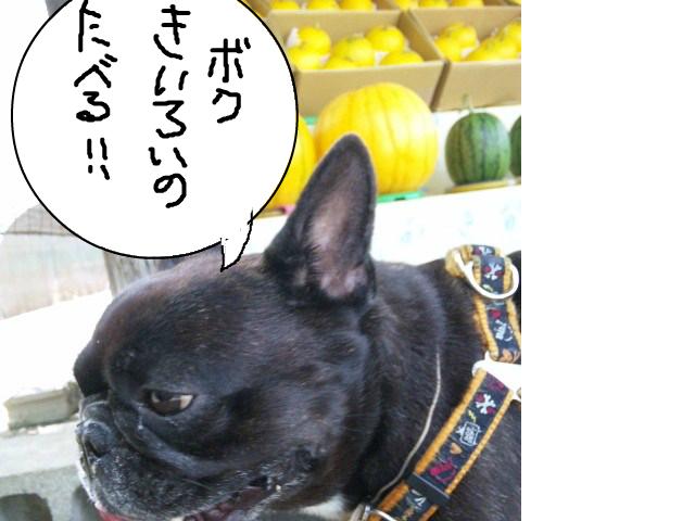 snap_myfrenchbulldog_20127314574.jpg