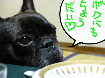 snap_myfrenchbulldog_201273203951.jpg