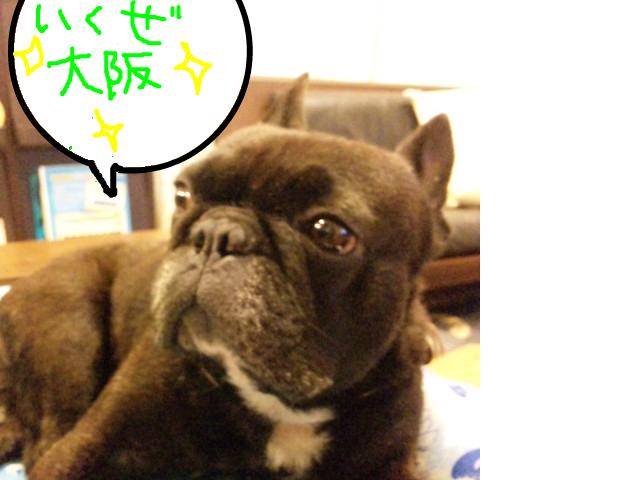 snap_myfrenchbulldog_201274213726.jpg