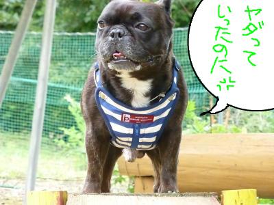 snap_myfrenchbulldog_20127493532.jpg