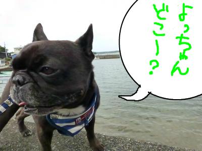 snap_myfrenchbulldog_20127494852.jpg